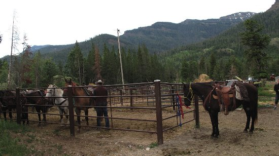 Shoshone Lodge & Guest Ranch : Lodge corral, horses being prepared for ride