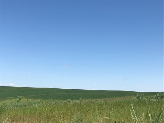 Walla Faces Inns at the Vineyard: Tell me this wasn't the inspiration for the Windows desktop background?