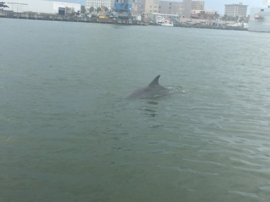 BayWatch Dolphin Tours: photo0.jpg