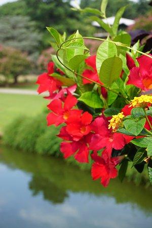 Red Japanese Garden Bridge boat basin at the japanese garden - picture of norfolk botanical