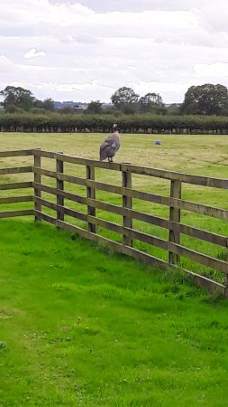 Kirkbymoorside ภาพถ่าย