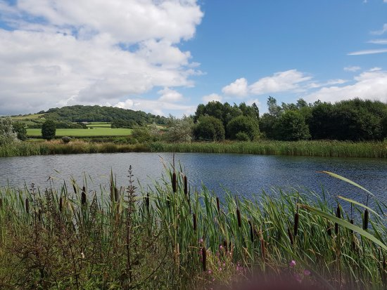 Bullrushes at the Lower Bruckland Farm Nature Reserve