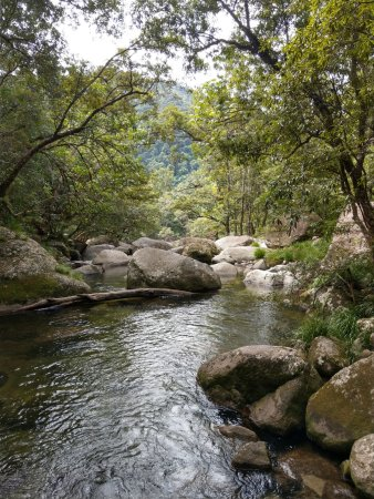 Daintree Region Picture