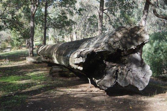 Centenary Log