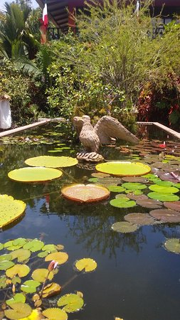 Cabo Corrientes, Mexico: lily pond