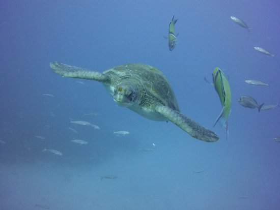 LJ Diving Tenerife: LJ Diving Tenerife
