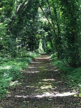 San Patricio Forest