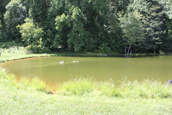 Middletown, MD: The pond at the top of the hill