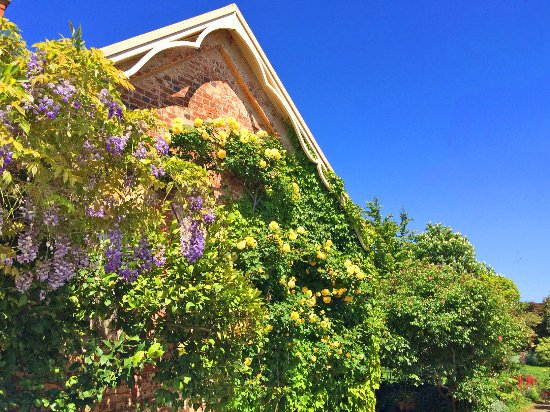 Longford, Australia: Wisteria flowering next to the convict made bricks
