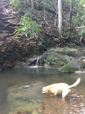 Montezuma, Costa Rica: Un habitué de la place bien sympathique !