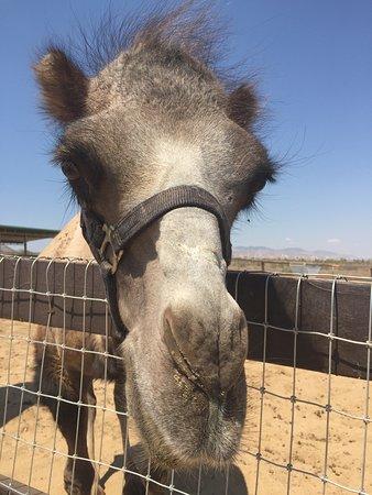 Rosamond, Califórnia: Windswept Ranch