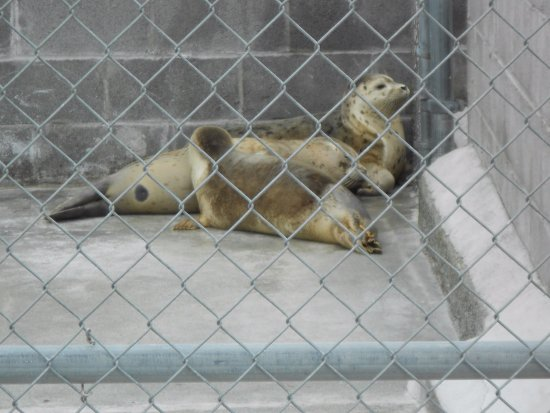 ‪Northcoast Marine Mammal Center‬