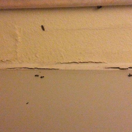 Bugs in room 313, Comfort Inn, Socorro, NM