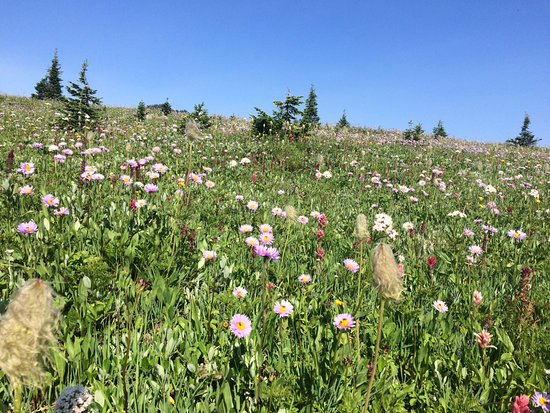 Purcell Mountain Lodge: Wild flowers in the meadows