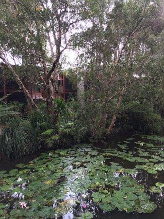 Suffolk-Park, Australien: Au milieu de la mangrove