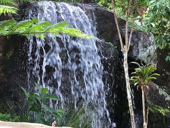Maleny, أستراليا: The gardens are amazing with many hidden nooks and crannies.  Easy to get around we hired a bugg