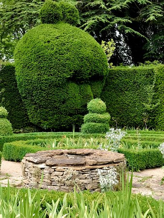 A Real Conversation Piece This Topiary Tree Within The Celtic
