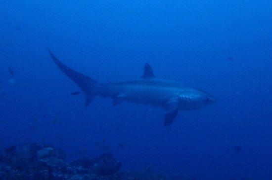 Malapascua Exotic Diving Center: photo1.jpg