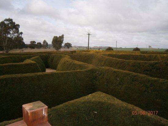 Aerial view of Mintaro Maze