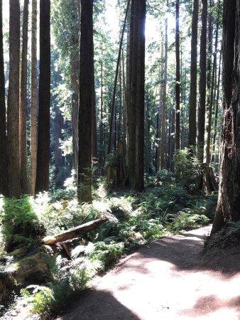 Arcata Community Forest: photo7.jpg