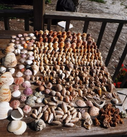 Mitchell's Sandcastles: A week's shell finds - All EMPTY - please return live shells to the sea!