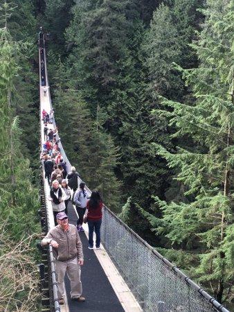 North Vancouver, Kanada: Capilano suspesion bridge