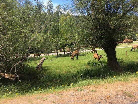 McKinleyville, Californië: Elk in Orick Ca