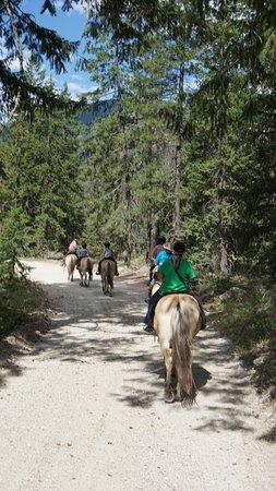 Stehekin, WA: nice gentle Norwegian Fjord horses