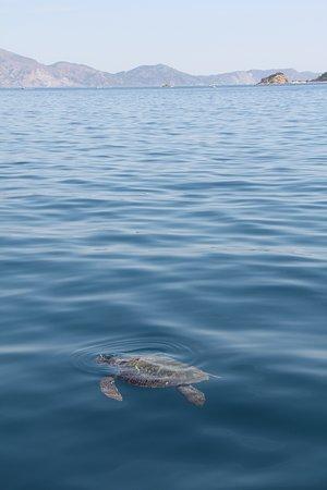 Lummi Island, Etat de Washington : photo1.jpg