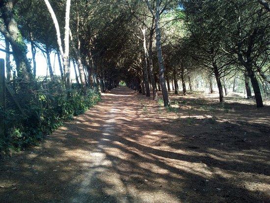 Castiglione del Lago, Italia: parte del percorso ciclabile