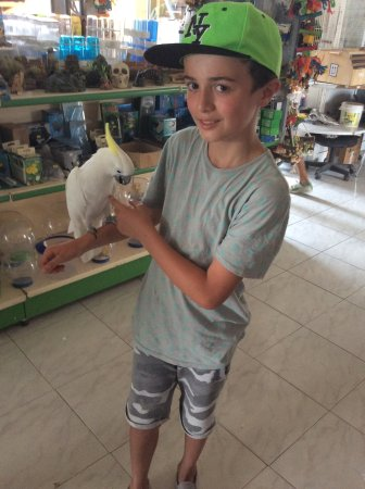 Melios Zoo: My son and his beloved friend the cockatiel