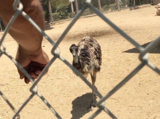 Melios Zoo: Mischievous emu