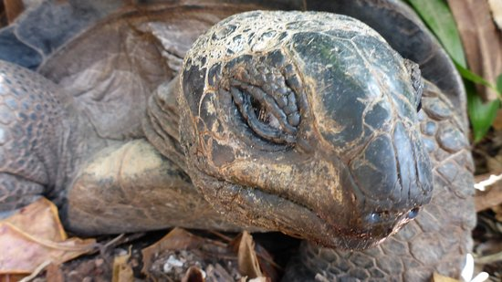 Hotel L'Ocean: Die Schildkröte beim Hotel
