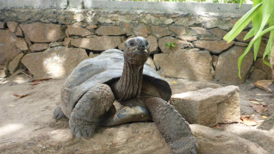 Hotel L'Ocean: Schildkröte auf der anderen Straßenseite