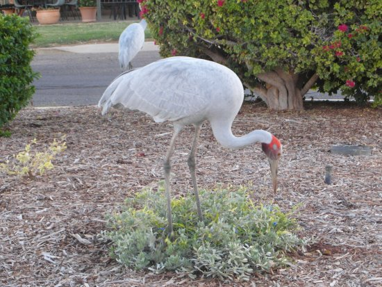 Outback Motel: Our Morning Bush Visitors