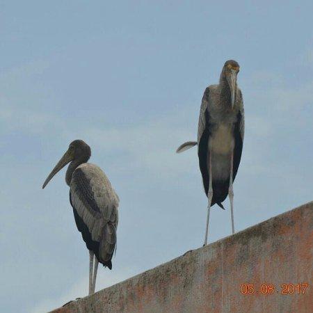 Lepakshi: Birds
