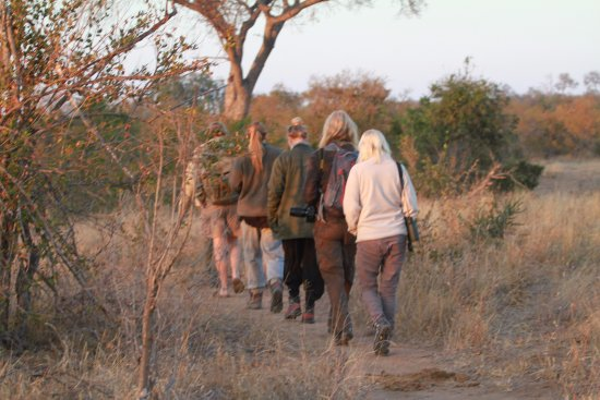 Timbavati Private Nature Reserve, South Africa: Walking brings you so much closer to nature