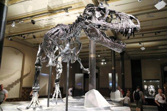 Museum Berlin Dinosaurier
