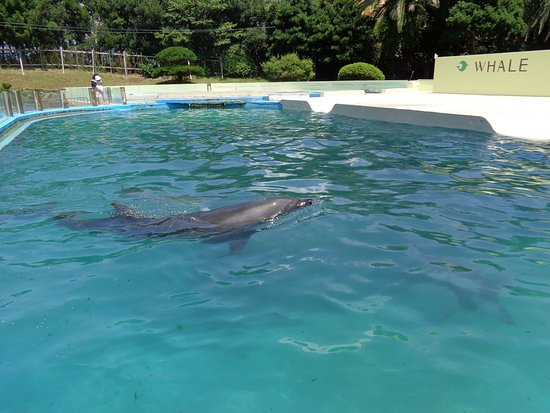 Taiji-cho, Japan: プールを泳ぐイルカ