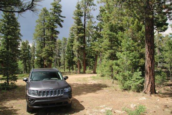 Jacob Lake, AZ: Mitten im Wald