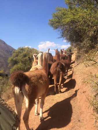 Llama Pack - Day Tours : Keeping up the rear, so to speak