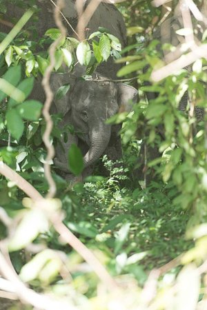 Abai Jungle Lodge: Elephant near the river