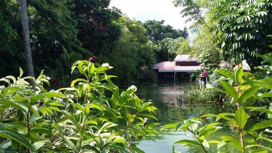 Bassin jardin botanique de deshaies deshaies resmi - Jardin botanique guadeloupe basse terre ...