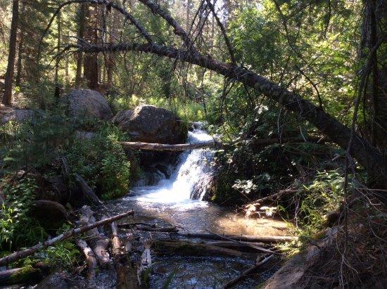 Pine Valley, ยูทาห์: Creek hike