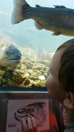 Branson, MO: My kids really enjoyed the fish hatchery!!