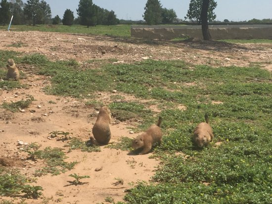 Mackenzie Park: I really enjoyed watching and feeding the prairie dogs.  I would highly recommend it.