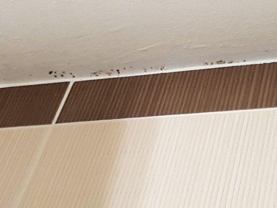 duschvorhang photo de hotel balladins dijon nord dijon tripadvisor. Black Bedroom Furniture Sets. Home Design Ideas