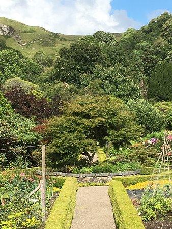 Argyll and Bute, UK: un bel érable