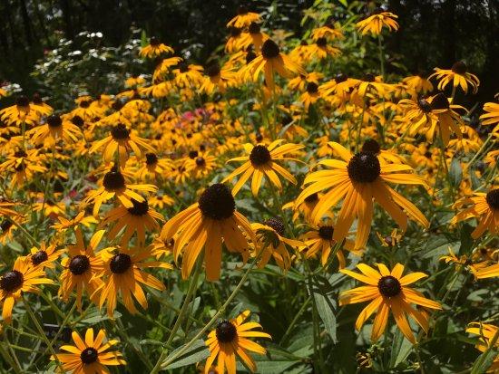 Botanical Garden : photo1.jpg