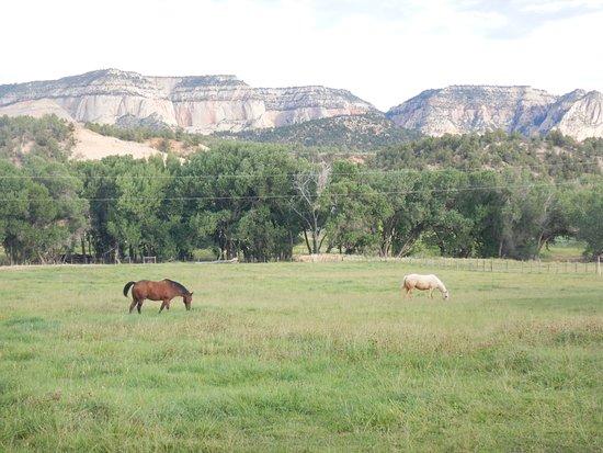 Mount Carmel Εικόνα